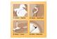 Vignette 8 du produit Jergens - Éclat Naturel Instant Sun lingettes à bronzage moyen, 6 unités