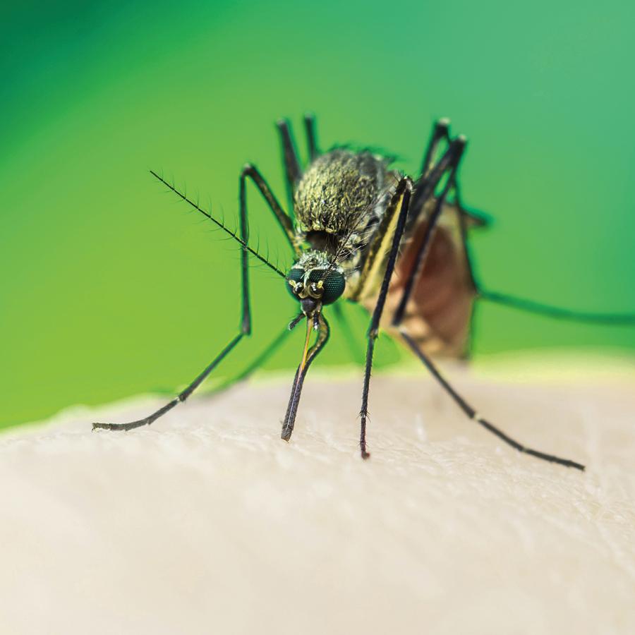 Zika virus—myths and reality