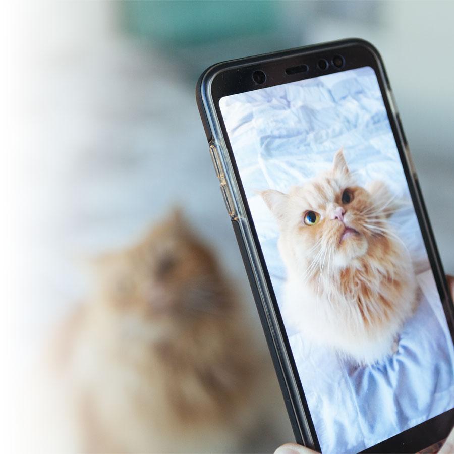 Photographier un animal de compagnie : quelques idées pour y parvenir