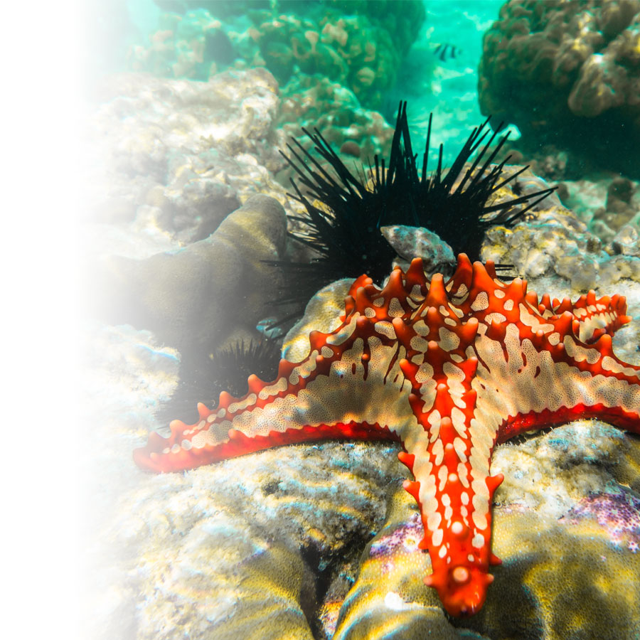 How to take stunning underwater pictures