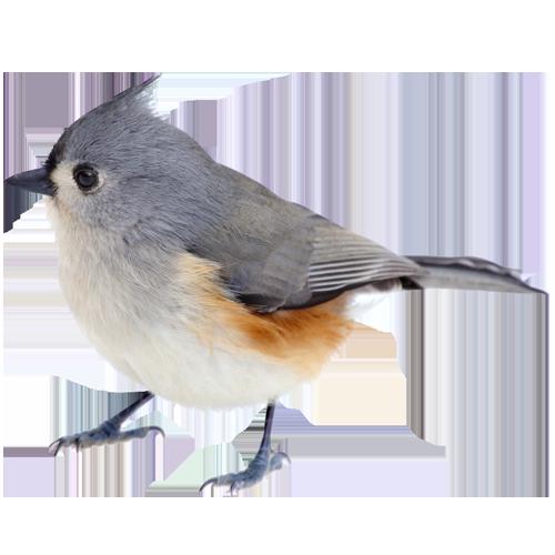 Comment r ussir vos photos d oiseaux jean coutu - Comment effrayer les oiseaux ...