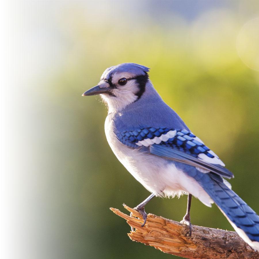 Comment réussir vos photos d'oiseaux