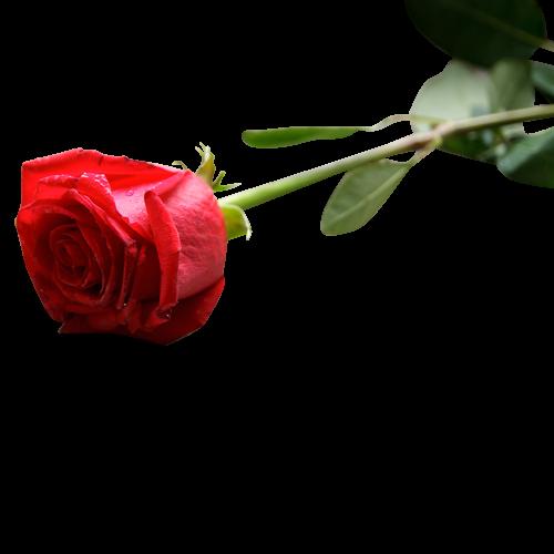 L'impact du deuil sur la santé