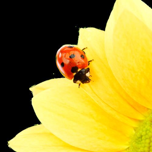La désensibilisation au pollen